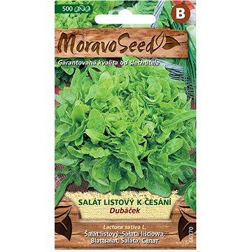 Salát listový k česání DUBÁČEK, zelený - Semena