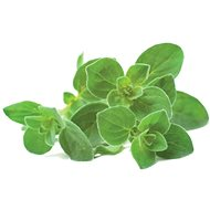 Click And Grow Oregano - Sazenice