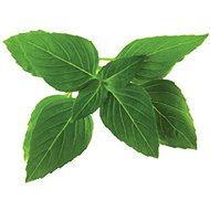 Click And Grow Bazalka thajská - Sazenice