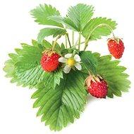 Click And Grow Lesní jahoda - Sazenice