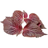 Click and Grow Červené shiso (Bazalka čínská) - Sazenice