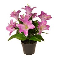 EverGreen Lily in a pot, height 30 cm, colour purple - Decoration