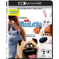 The Secret Life of Pets (2 discs) - Blu - Blu-ray Movies