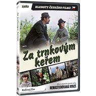 Za trnkovým keřem - edice KLENOTY ČESKÉHO FILMU (remasterovaná verze) - DVD - Film na DVD