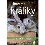 Chováme králíky: Nenároční ušáci v králíkárně
