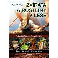 Zvířata a rostliny v lese: Průvodce lesním ekosystémem - Kniha