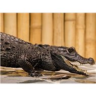 Feeding crocodiles for two - Printed Voucher