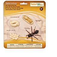 Safari Ltd. Životní cyklus - Mravenec - Anatomický model