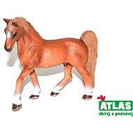 Atlas Kůň