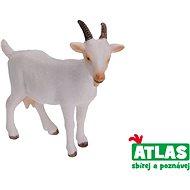Atlas Koza