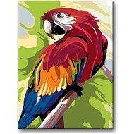 Malování podle čísel - Barevný papoušek - Malování podle čísel