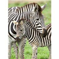 Ravensburger 129485 Oblíbené zebry 300 dílků
