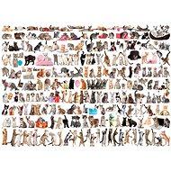 Eurographics Puzzle Svět koček 1000 dílků - Puzzle