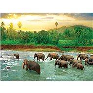 Eurographics Puzzle Save Our Planet: Deštný prales 1000 dílků - Puzzle