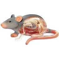 4D Krysa - Anatomický model