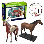 4D Kůň - Anatomický model