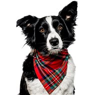 Chiweto Deluxe Bella M, Red Squares - Dog Scarves
