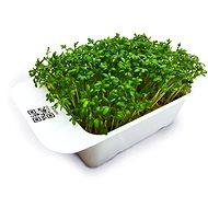 Microgreens by Leaf Learn řeřicha - Sazenice