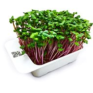 Microgreens by Leaf Learn ředkev - Sazenice