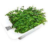 Microgreens by Leaf Learn hořčice - Sazenice