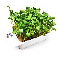 Microgreens by Leaf Learn daikon - Sazenice