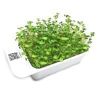 Microgreens by Leaf Learn brokolice - Sazenice