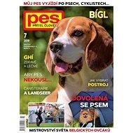 Pes přítel člověka - 7/2019 - Elektronický časopis