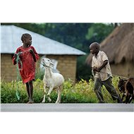 Herd of Goats for Children in Rwanda - Charity Project