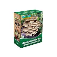 Oyster mushroom 250ml - Wood-Decay Fungi
