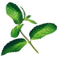 Plantui Mint - Kapsle