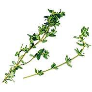 Plantui Thyme