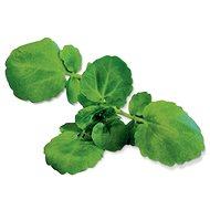 Plantui Watercress - Kapsle