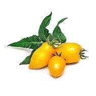 Véritable Lingot Mini žlutá rajčata - Sazenice