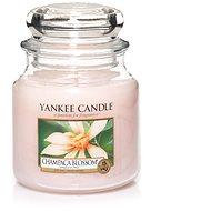YANKEE CANDLE Classic střední 411 g Champaca Blossom - Svíčka