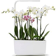 TREGREN T6 Kitchen Garden, White - Smart flower pot