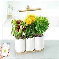 Pret a Pousser Lilo Edition - Chytrý květináč