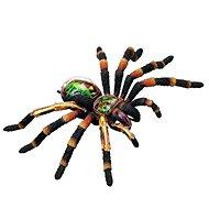 4D Tarantule - Anatomický model