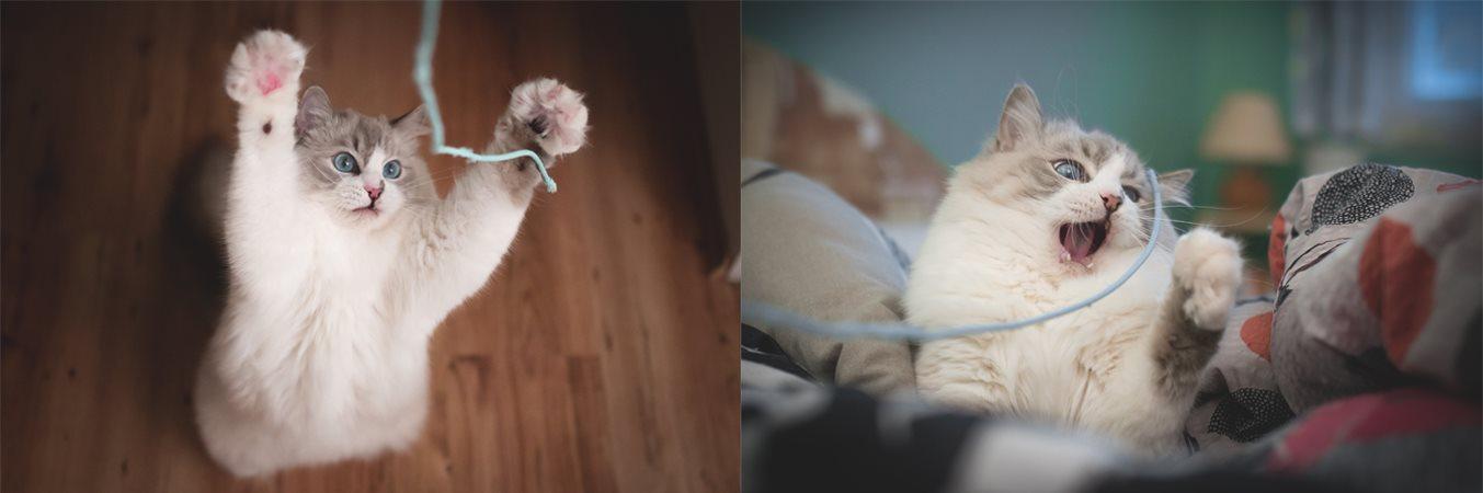 Pevně růžová kočička zblízka