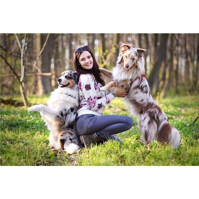 Online kurz základní poslušnosti pro dospělé psy i štěňata - Voucher: