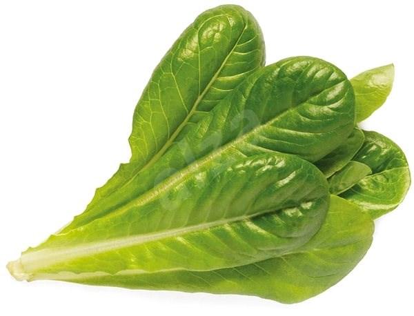 Click and Grow Římský salát - Sazenice