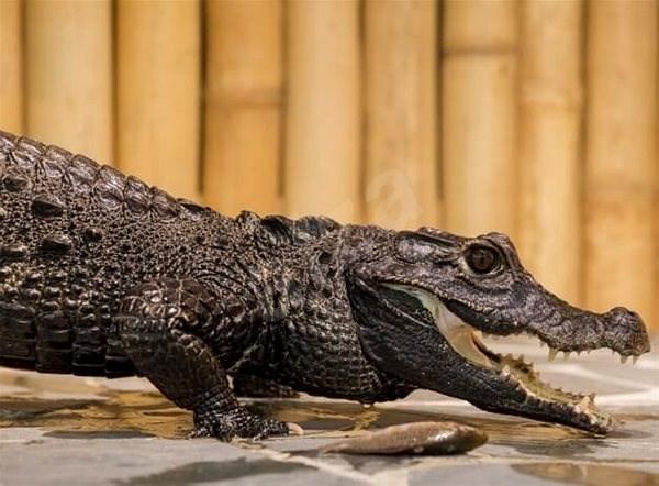 Krmení krokodýlů pro dva - Tištěný voucher