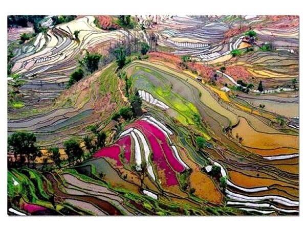 Rýžová pole Čína 1000 dílků - Puzzle