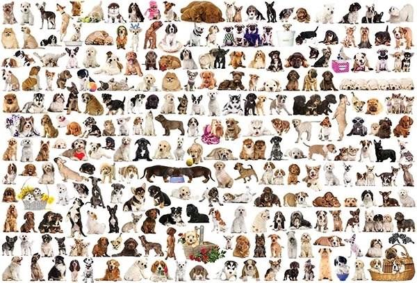 Eurographics Puzzle Svět psů 1000 dílků - Puzzle