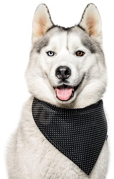 Chiweto Aida S, černá, puntíky - Šátek pro psy