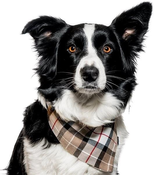 Chiweto Deluxe Jessy L, béžová kostka - Šátek pro psy