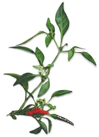 Plantui Chili Demon Red - Kapsle