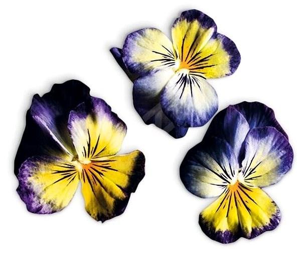 Plantui Viola Lemon Blueberry - Kapsle