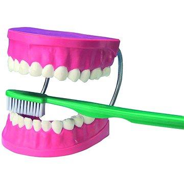 Velký model pro dentální péči (4893338290016)